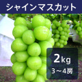 【送料込】シャインマスカット 2kg