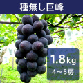 ぶどう 種無し巨峰 約1.8kg