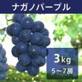 【送料込】ナガノパープル 3kg