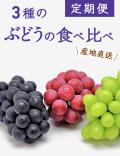 【送料無料】 小布施町の3種のぶどうの食べ比べ定期便(約1kg×3回)