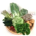 【送料込】直売所から直送 旬の野菜・果物セット