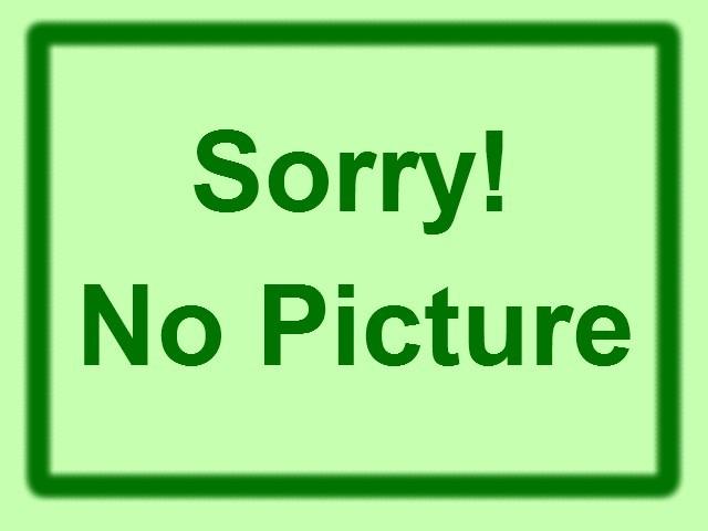 ラベンダー ラチオーリア(3寸ポット)ハーブ苗