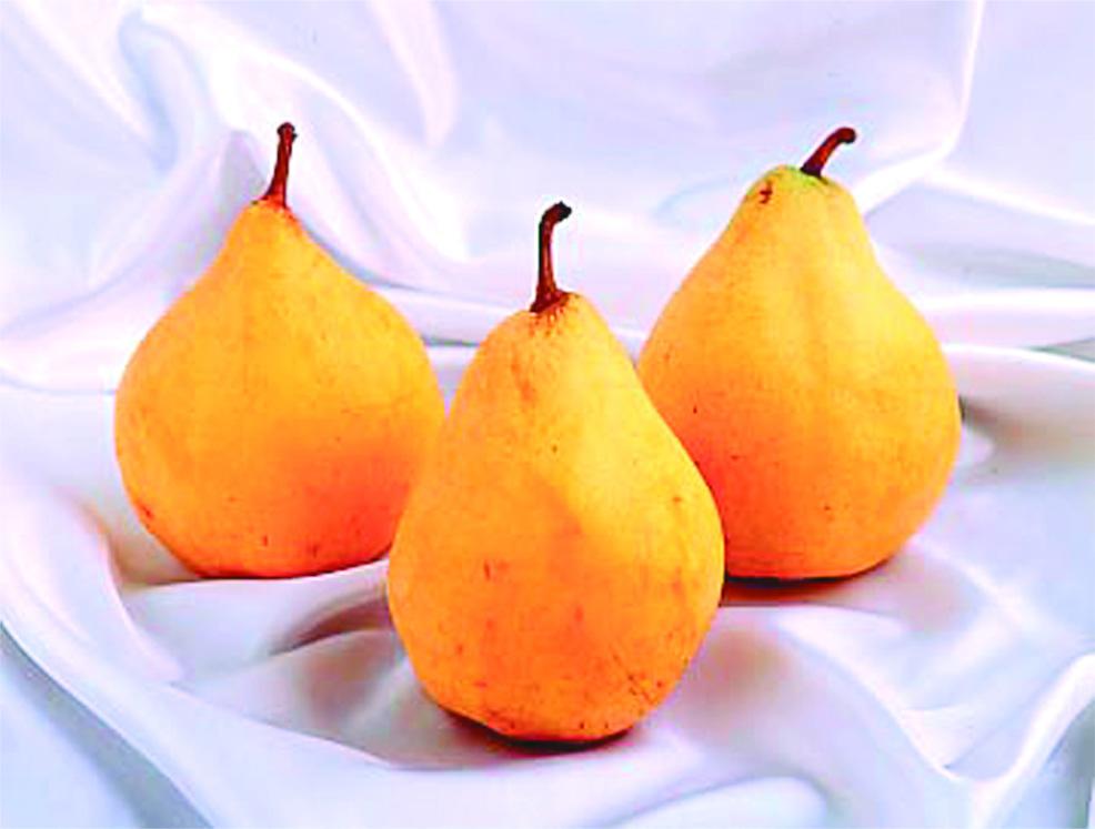 <数量限定>木村農園さんの西洋梨の王様 ル・レクチェ  6玉(約2kg)【送料無料】 | こめや丸七