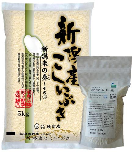 <令和2年産>新潟県産こしいぶき5kg+新潟市秋葉区産もち麦500g詰め合わせセット