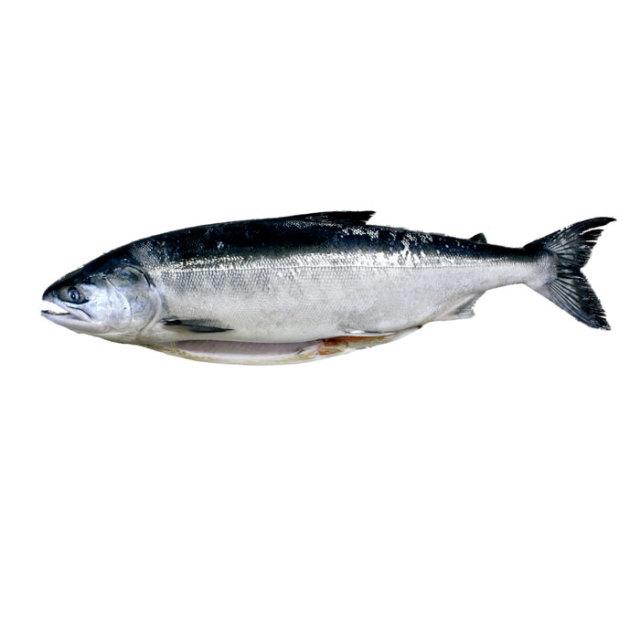 時不知鮭(一本物)