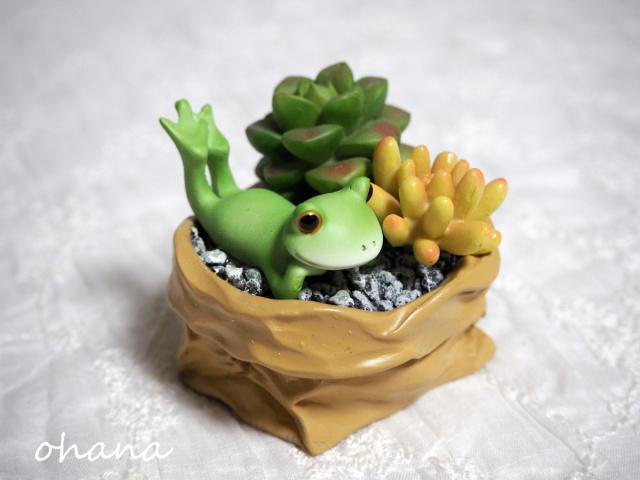 多肉植物鉢とカエル
