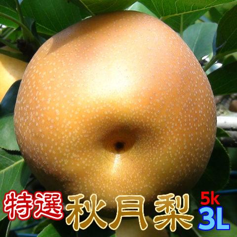 特選完熟秋月梨3L以上5kg14玉以下
