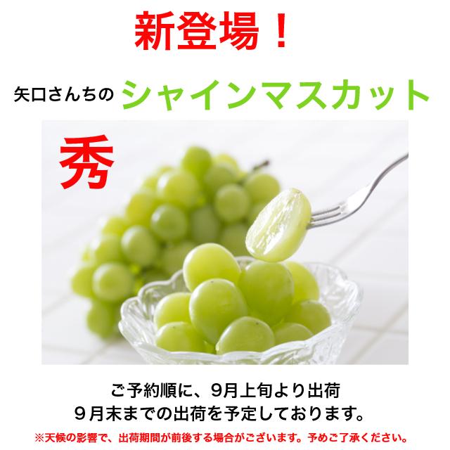 【送料無料】シャインマスカット2房(1房700~800g)