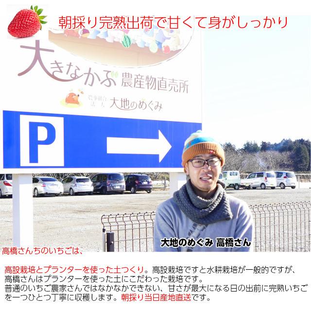 高橋さんちのいばらキッス甘くて、酸味とのバランスがとってもおいしいイチゴ