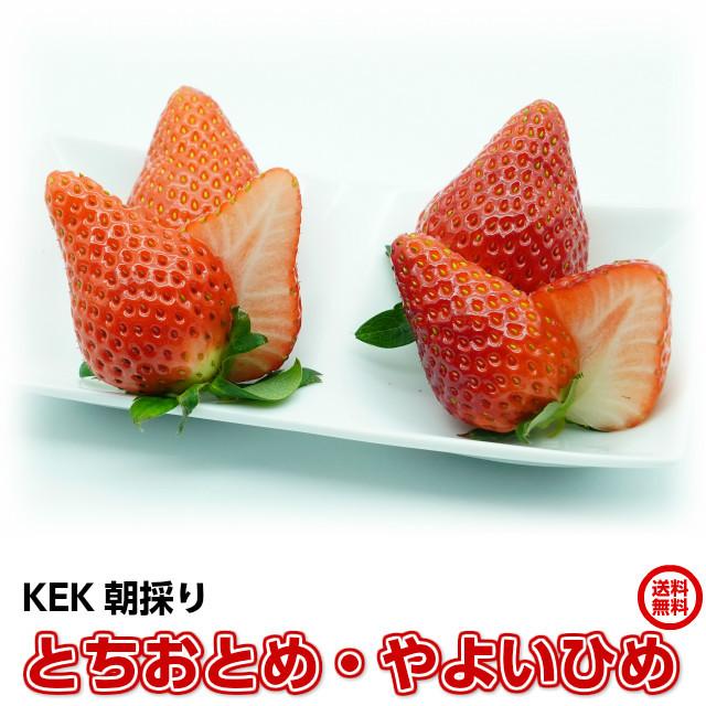 KEKのイチゴ,とちおとめ,やよいひめ,完熟食べ比べセット
