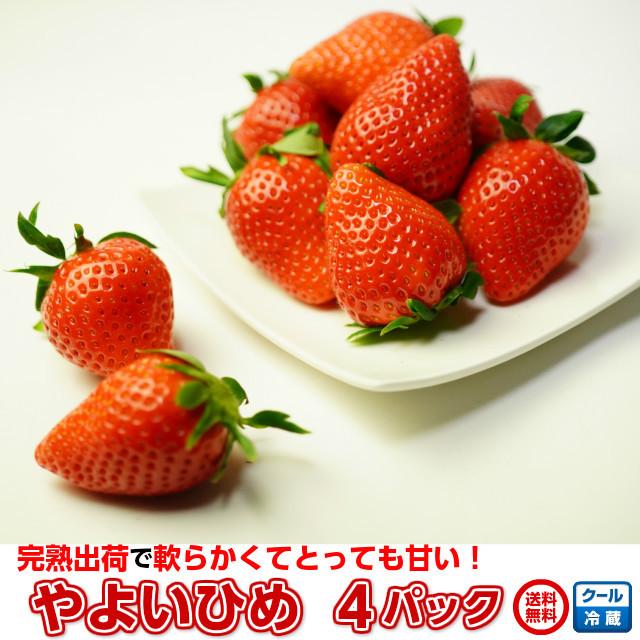 苺いちご小橋さんちのイチゴやよいひめ