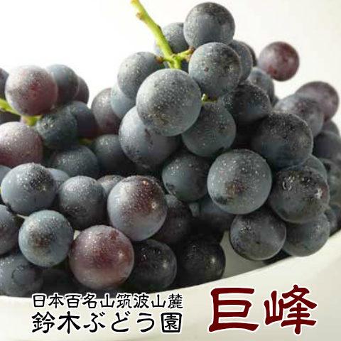 50箱限定 お彼岸に 訳あり 巨峰 茨城県 送料無料 巨峰予約 ぶどう フルーツ 巨峰 種あり 約1.5kg ご家庭用 ブドウ 葡萄 甘い 美味しい お取り寄せ 産地直送