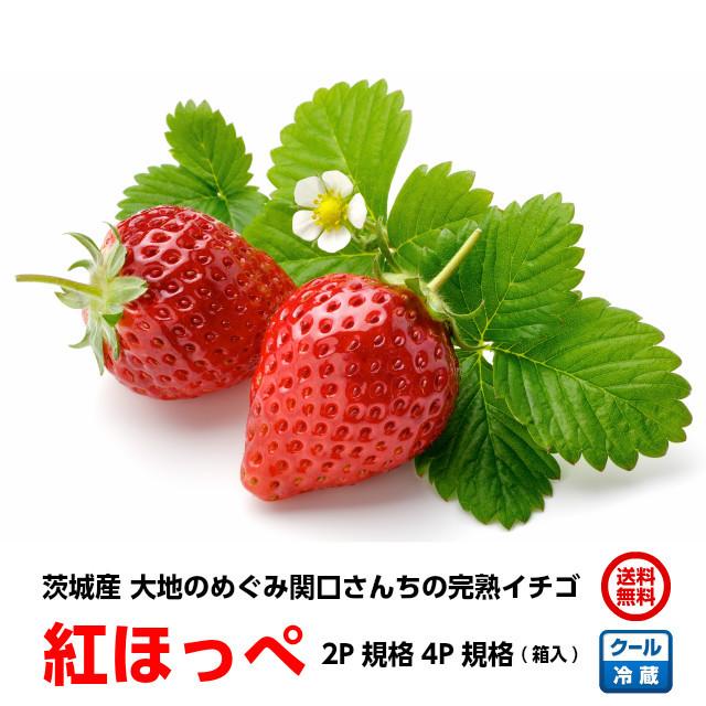 関口さんちのイチゴ,べにほっぺ,茨城県産