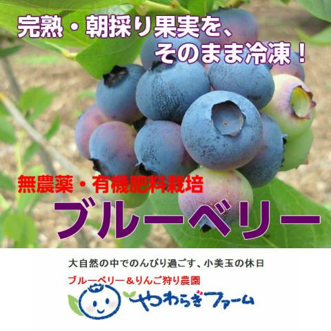 やわらぎファーム【送料無料】冷凍ブルーベリー500g×2