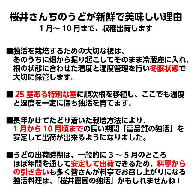 桜井さんちの「柔らか筑波白うど」