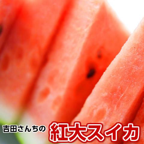 【甘さとシャリ感の紅大スイカ[M]1玉】1玉5kg以上