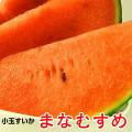 小玉すいか「まなむすめ」薄い果皮と甘い果肉が特徴の紅こだまスイカです。