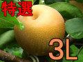 幸水梨L以上でお届け【完熟】収穫当日出荷新鮮さが違います