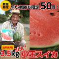 小玉スイカ「まなむすめナツコDX」3L3.5kg以上