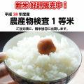 白米 コシヒカリ お取り寄せ こしひかり 清明川コシヒカリ 白米10kg 特別栽培米 茨城 小澤さんちの冷めてもおいしいコシヒカリ