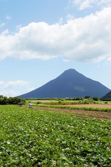 鹿児島の畑