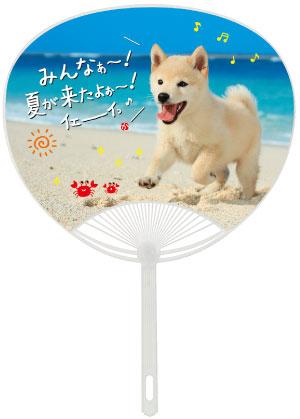 名入れに最適なうちわ!No.108 ポリうちわ(平柄) 犬
