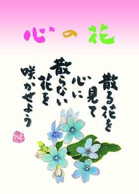 万年カレンダー家庭用(小売) 『NK-8651 心の花 小籔実英(万年日めくりカレンダー)』