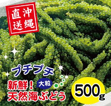 天然海ぶどう(500g)