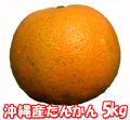 【送料無料】沖縄産たんかん5kg(20~30個程度)