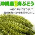 【送料無料】沖縄産海ぶどう50g沖縄県産シークァーサー果汁入り海ぶどうのタレ付き