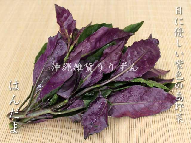 ハンダマ 紫の色合いの葉野菜