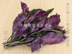 紫色の沖縄の島野菜ハンダマ
