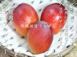 お買い得 沖縄県産アップルマンゴー
