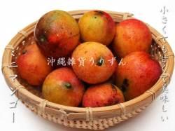 沖縄県産ミニマンゴー