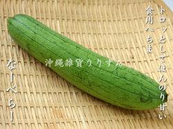 ナーベラー(沖縄食用へちま) 沖縄の島野菜