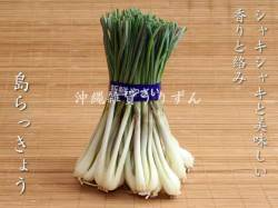 島らっきょう 沖縄の島野菜