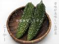 沖縄県産ゴーヤー(苦瓜) 沖縄の島野菜