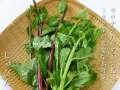 ジュビン(つるむらさき)沖縄の島野菜