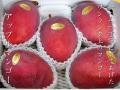 沖縄産長嶺さん高級アップルマンゴー