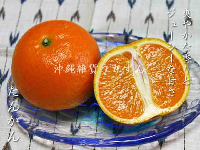 たんかん 沖縄の柑橘