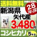 新米28年産新潟県矢代産コシヒカリ5kg