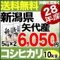 新米28年産新潟県矢代産コシヒカリ10kg