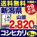 【新米】29年産新潟県産コシヒカリ 山並 5kg