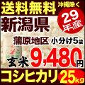 【新米】29年産新潟県蒲原産コシヒカリ 玄米 25kg