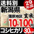 【新米】29年産新潟県蒲原産コシヒカリ 玄米 30kg【送料別】