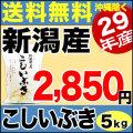 【新米】29年産 新潟県産こしいぶき 5kg