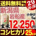 29年産新潟県岩船産コシヒカリ玄米 小分け5袋 25kg