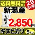 【新米】29年産新潟県産キヌヒカリ 5kg
