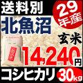 【地域限定】29年産新潟県北魚沼産コシヒカリ 30kg【送料別】