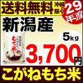 【新米】29年産新潟県産こがねもち米 5kg